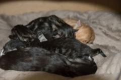 Vi sover i klump
